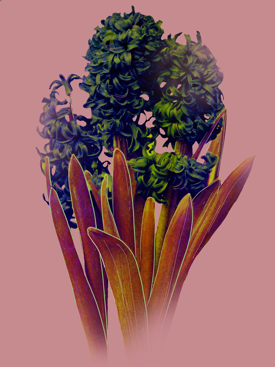 shan-gev-tall-flowers-V02